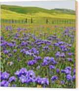 Wildflowers Carrizo Plain Wood Print