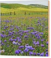 Wildflowers Carrizo Plain National Monument Wood Print