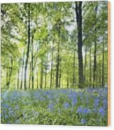 Wildflowers In A Forest Of Trees Wood Print
