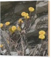 Wildflowers In Rocks Wood Print