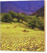 Wildflowers In The San Emigdio Mountains Wood Print