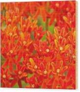 Wildflowers In The Smokies Wood Print