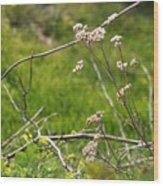 Wildflowers Marblehead Massachusetts Wood Print