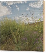 Wildflowers Of Chaco Wood Print