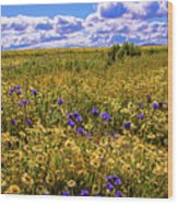 Wildflowers Of The Carrizo Plain Superbloom 2017 Wood Print