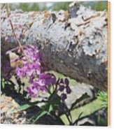 Wildflowers On The Fence Wood Print