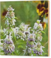 Wildflowers Three Wood Print