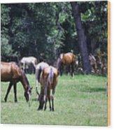 Wildhorses Of Cumberland Wood Print