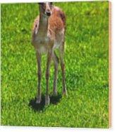 Wildlife 2 Wood Print