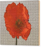 Will The Poppy In The Back Please Stand Up Wood Print