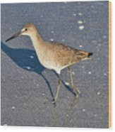 Willet And Shadow Wood Print