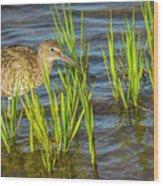 Willet Feeding In The Marsh 2 Wood Print