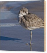 Willet Resting At The Beach Wood Print