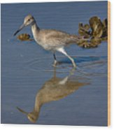 Willet Searching For Food In An Oyster Bed Wood Print