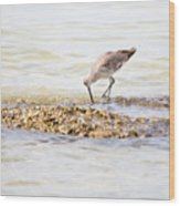 Willet Set 2 Of 4 By Darrell Hutto Wood Print