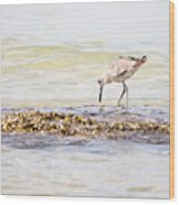 Willet Set 3 Of 4 By Darrell Hutto Wood Print