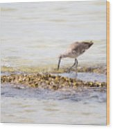 Willet Set 4 Of 4 By Darrell Hutto Wood Print