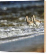 Willets In The Waves Wood Print