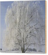 Willow In Ice Wood Print