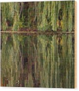 Willow Reflection Wood Print