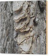 Willow Tree Bark Up Close Wood Print