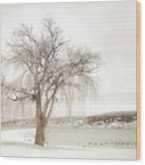 Willow Tree In Winter Wood Print