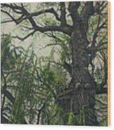 Willow Tree Wood Print