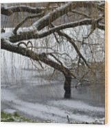 Willow Tree On The Frozen Lake Detail Wood Print