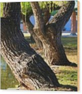 Willow Trees Wood Print