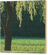 Willow Weeping Wood Print