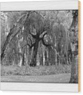 Willows Wood Print