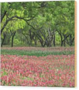 Willows,indian Paintbrush Make For A Colorful Palette. Wood Print