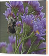 Willowwood Bee Wood Print