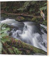 Wilson Creek #18 With Added Cedar Waxwing Wood Print