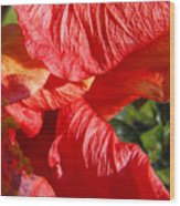 Wilting Hibiscus Two Wood Print