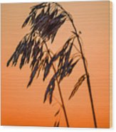 Wilting Sunset Wood Print