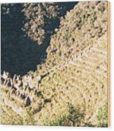 Winay Wayna Wood Print