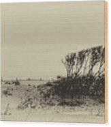 Wind Grown Beach Trees Wood Print