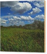 Wind In The Cattails Wood Print