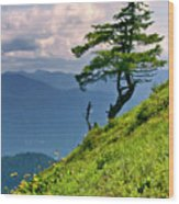 Wind Sculpted Conifer Wood Print
