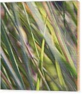 Wind Tossed - Wood Print