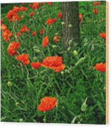 Windblown Poppies Wood Print