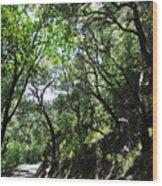 Winding Road Santa Ynez Mountains Wood Print
