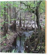 Winding Sopchoppy River Wood Print
