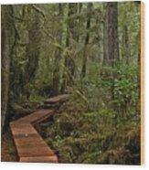 Winding Through The Willowbrae Rainforest Wood Print