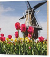 Windmill Island Tulip Gardens Wood Print