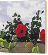 Window Flowers Wood Print