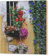 Window Garden In Arles France Wood Print