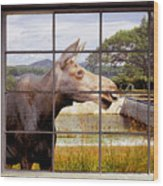 Window - Moosehead Lake Wood Print