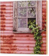 Window Of Ivy Wood Print